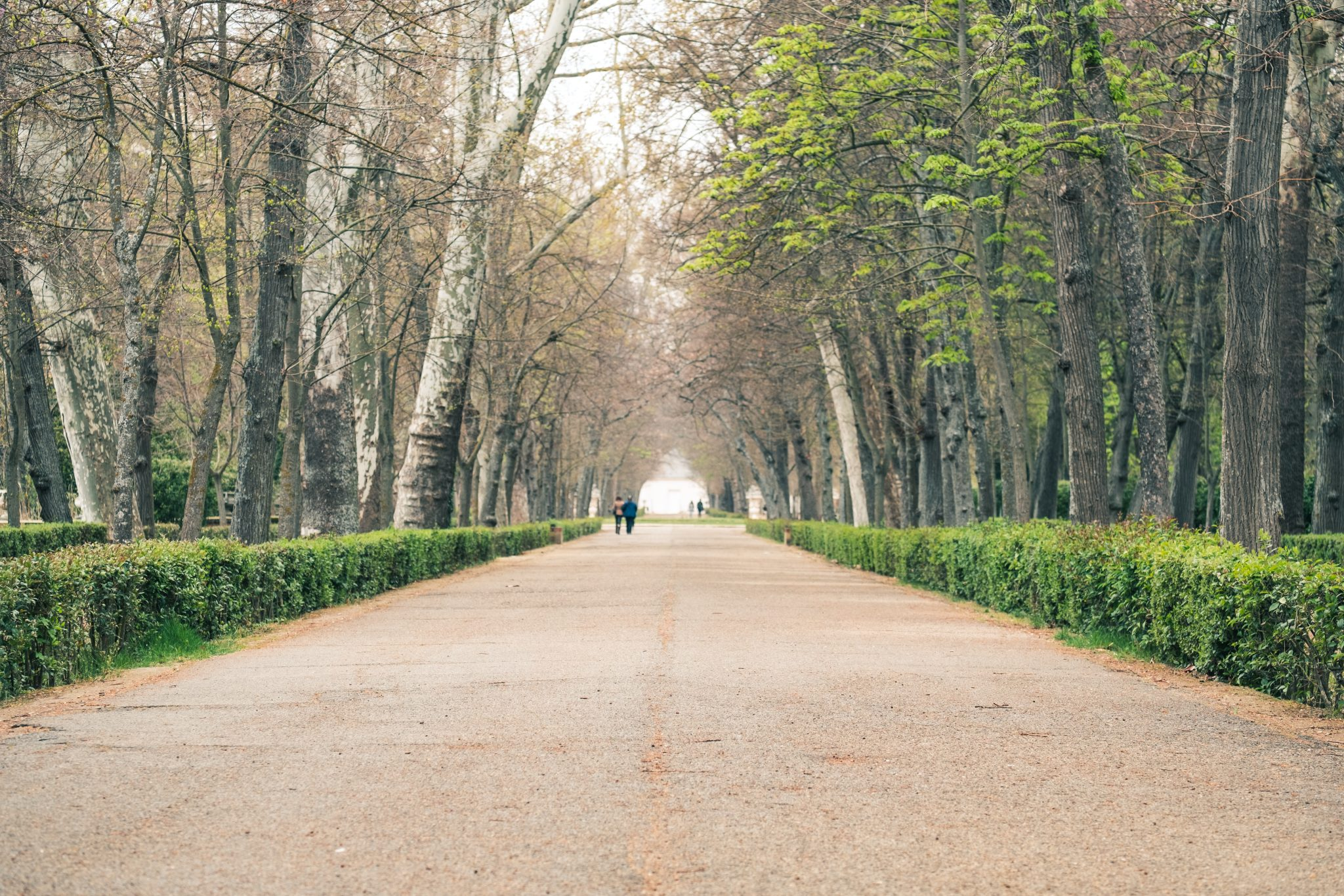Walkway in the garden of Aranjuez photo by Jo Kassis