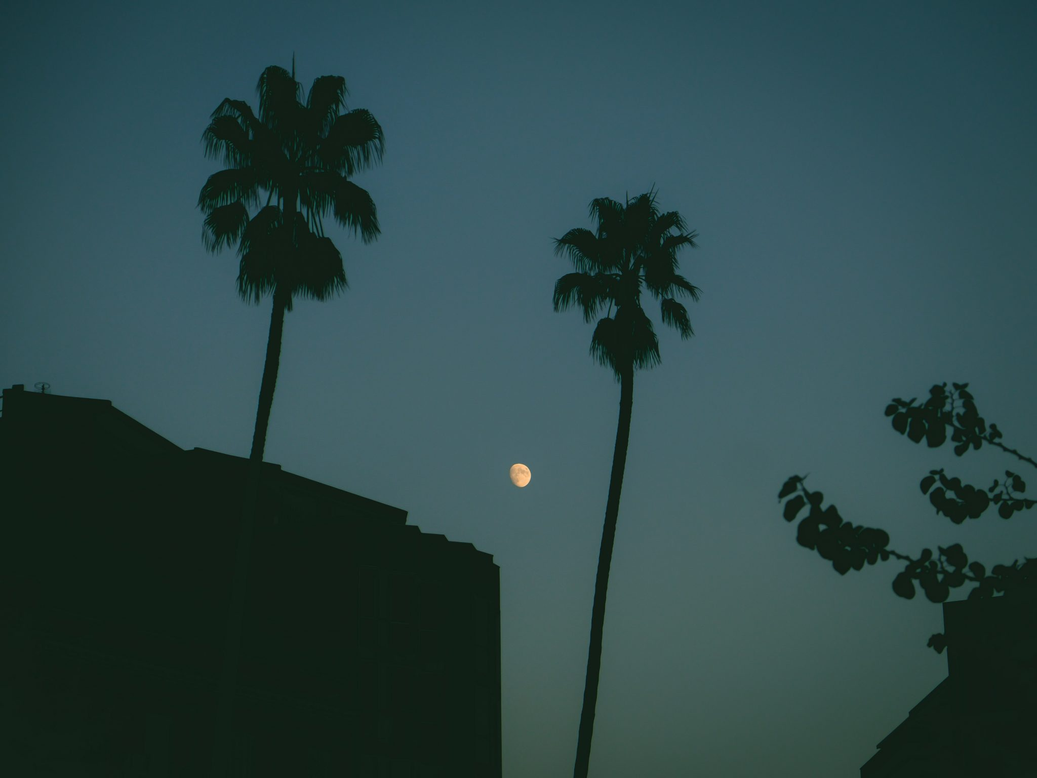 Silhouette of palm trees at night with the moon in the background photo by Jo Kassis