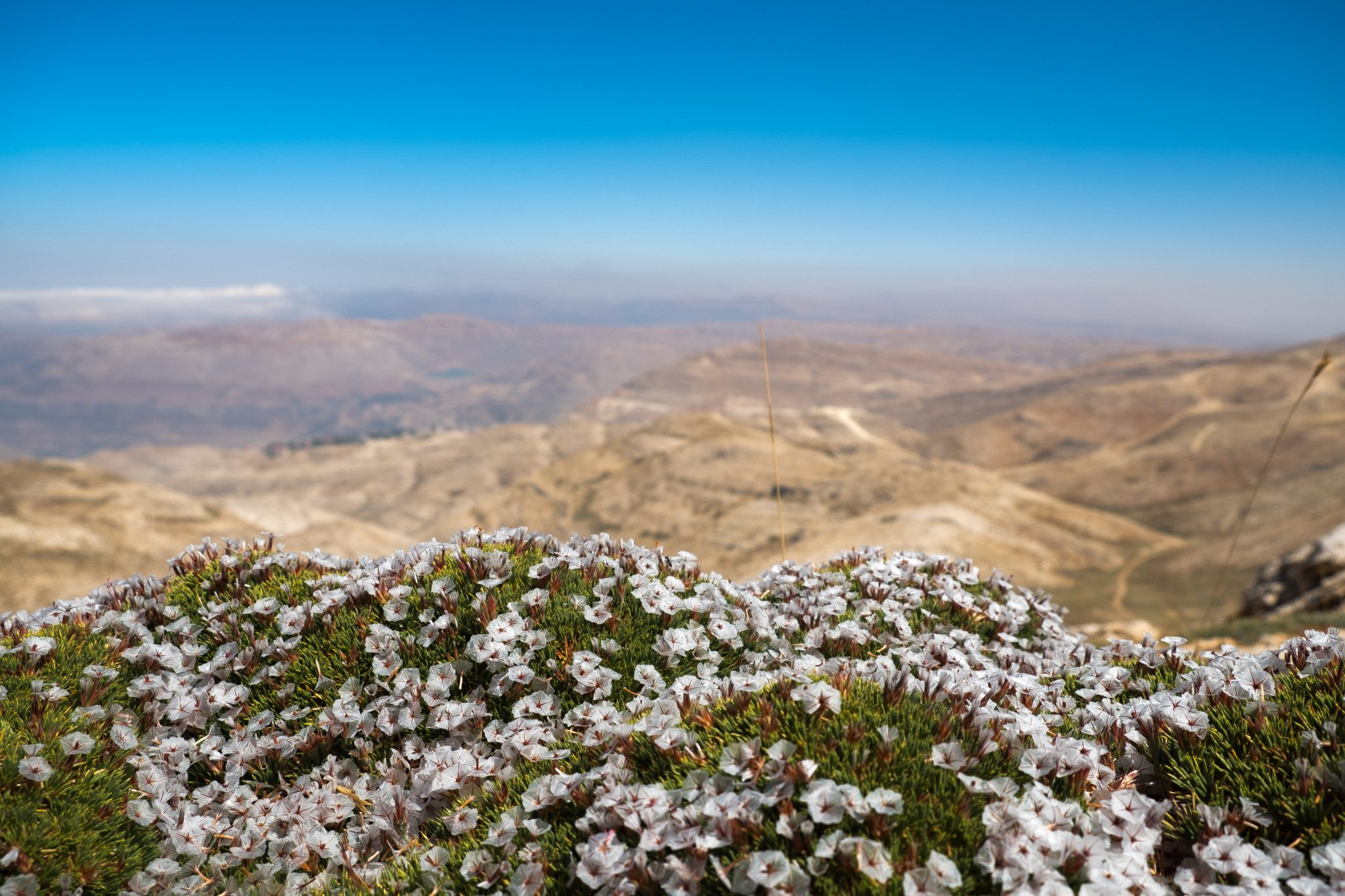 Panoramic view with flowers from lebanese mountain Faraya photo by Jo Kassis