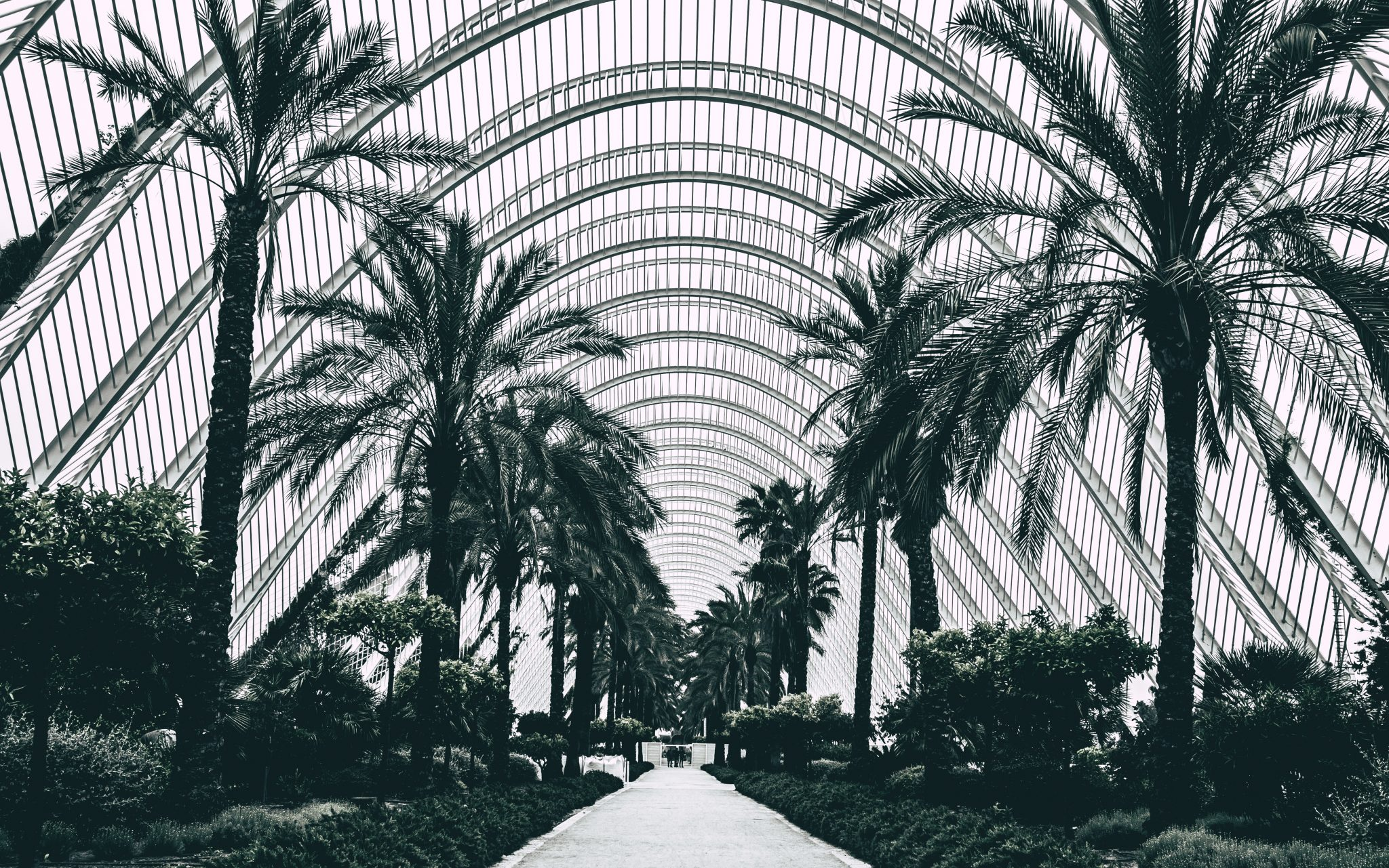 Palm trees in Valencia photo by Jo Kassis