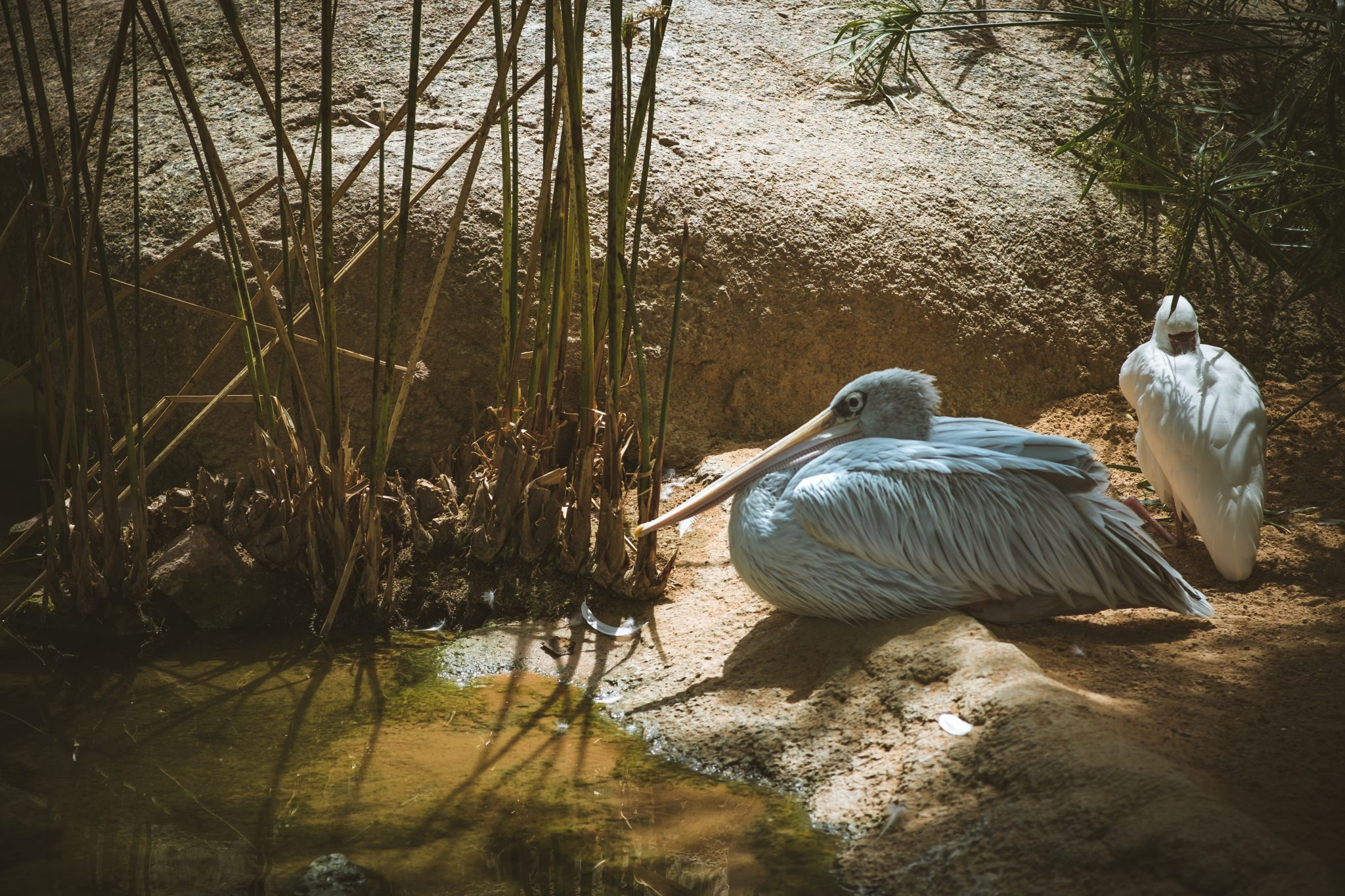 Two birds relaxing by a lake on a sunny day photo by Jo Kassis