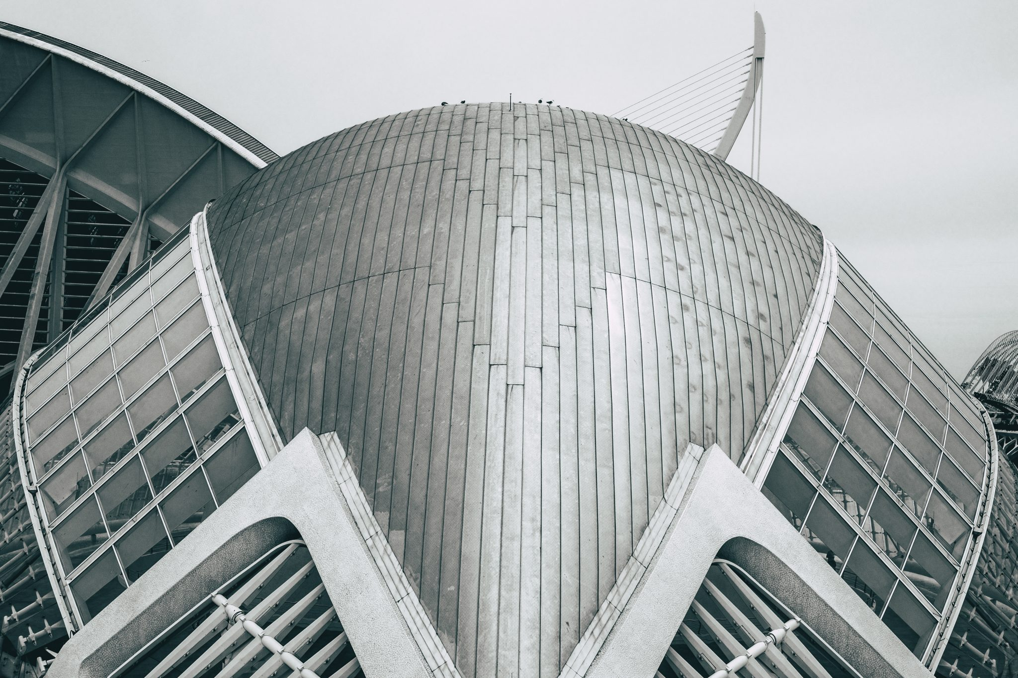 Closeup of the architectural complex The City of Arts and Sciences in the city of Valencia photo by Jo Kassis