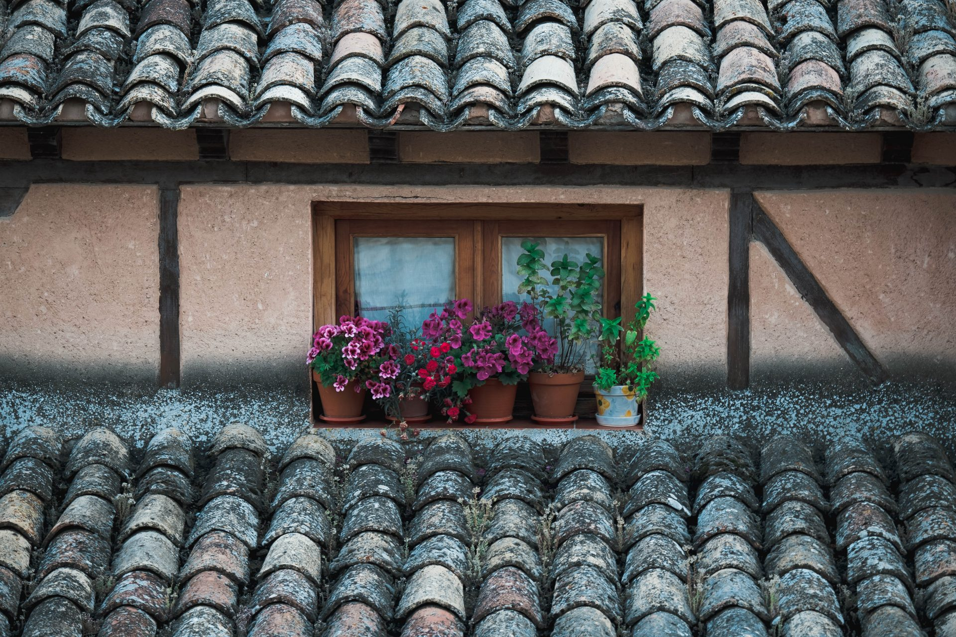 Flowers by a window of a historical house in Cuenca photo by Jo Kassis
