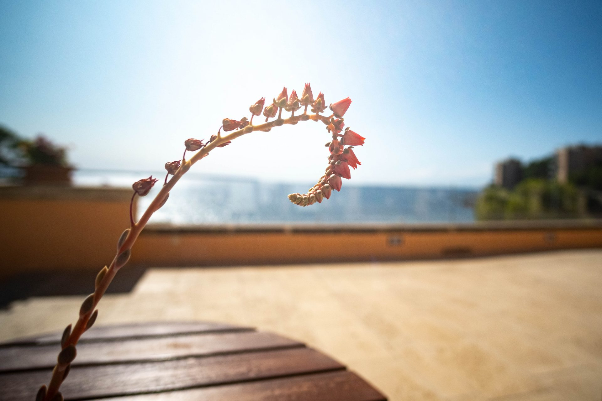 Flower with the mediterranean sea in the background at the Hospes Hotel Maricel Mallorca photo by Jo Kassis