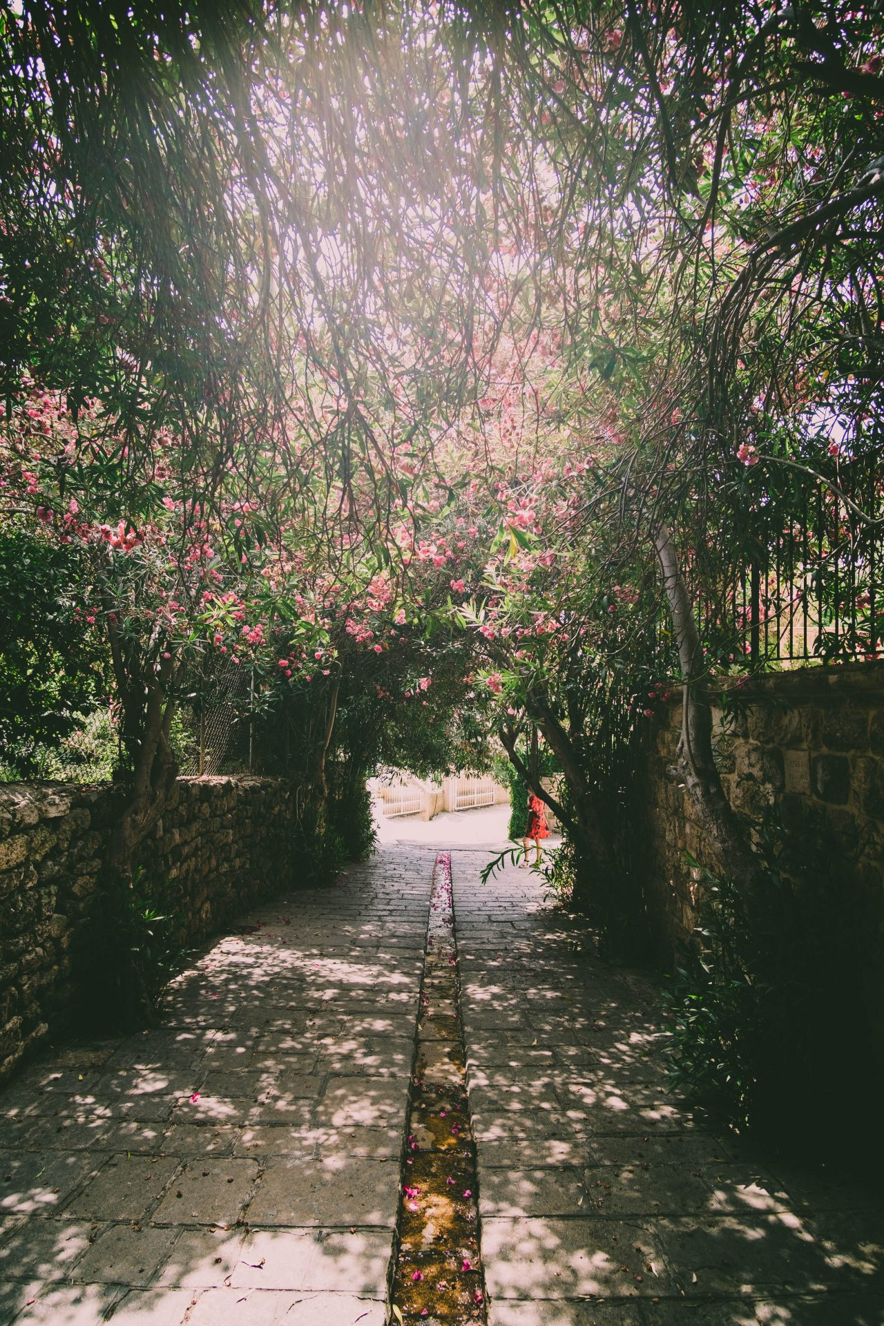 Historical street in Byblos lebanon with flowers photo by Jo Kassis