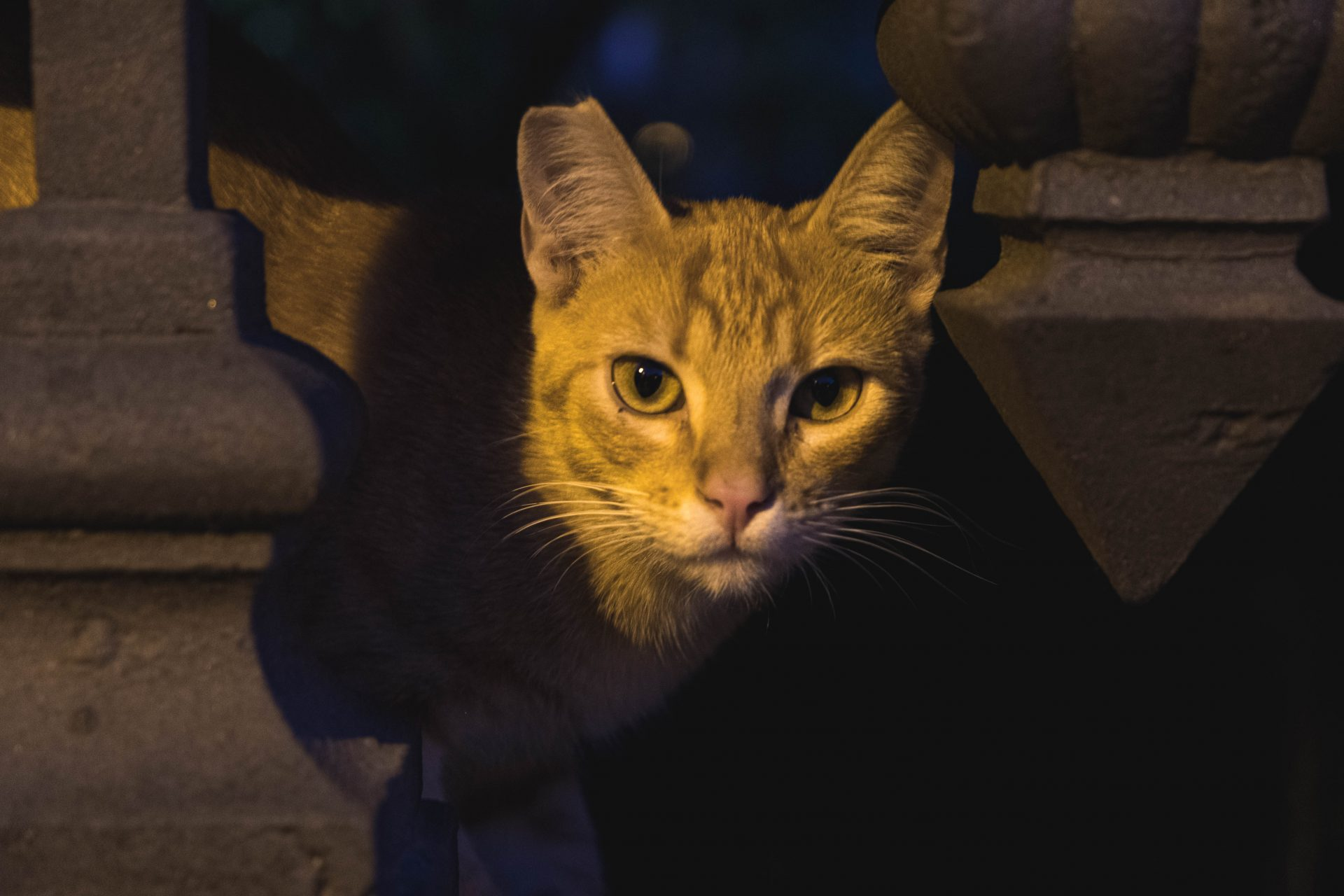 Portrait of a cat at night photo by Jo Kassis