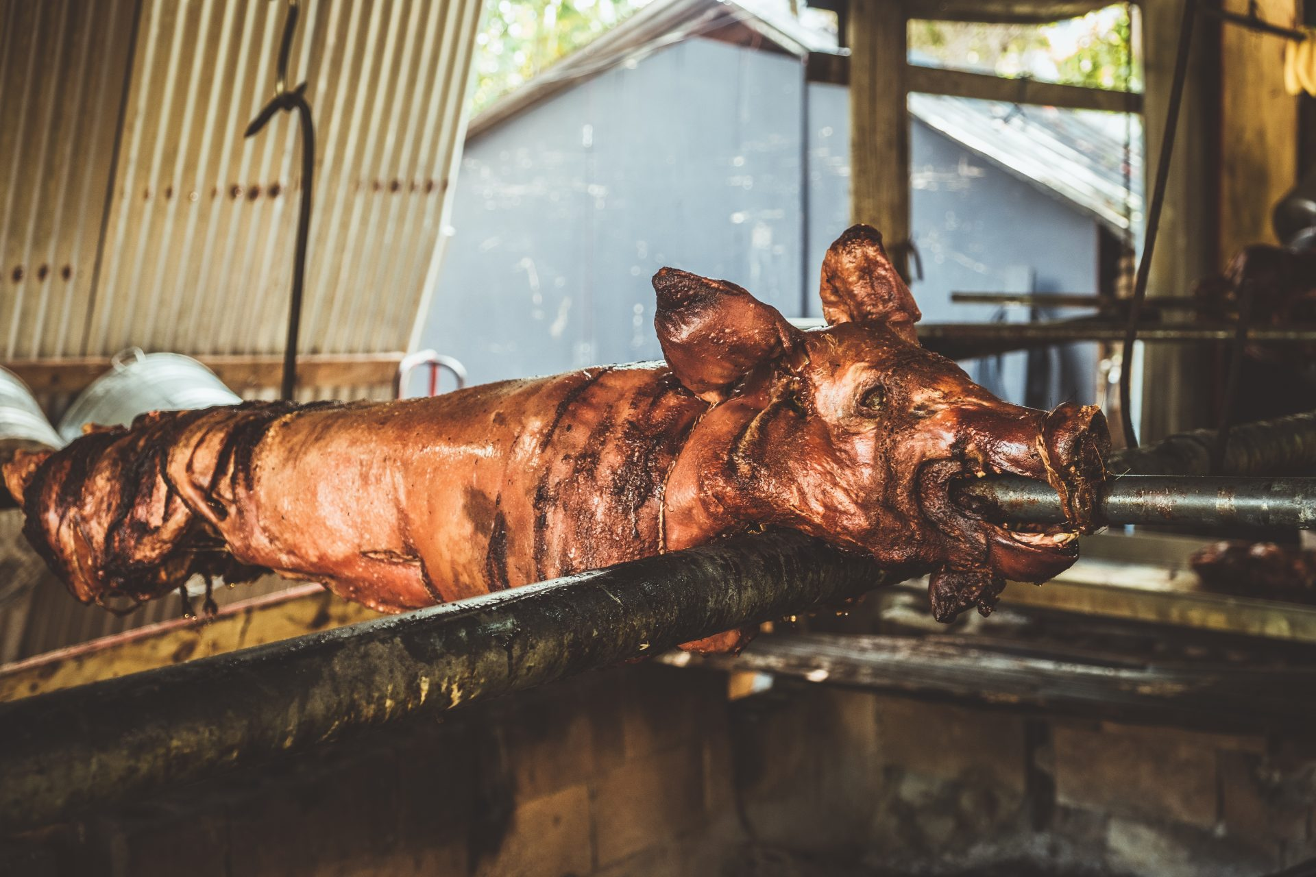 Roasting Pig lechon in the rancho de Apa in Puerto Rico Photo by Jo Kassis