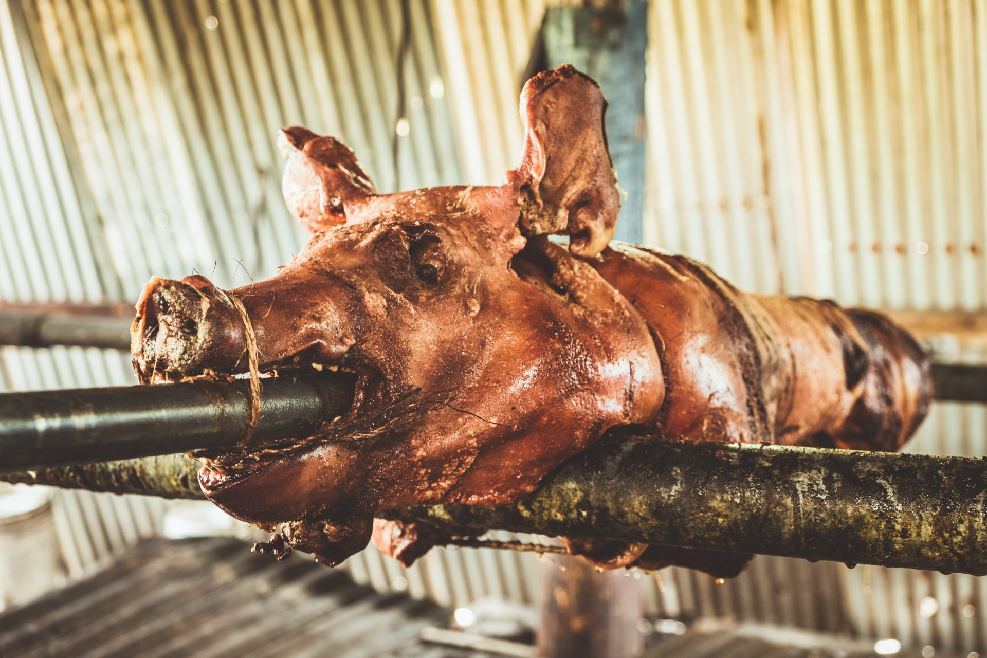 Pig lechon in the rancho de Apa in Puerto Rico Photo by Jo Kassis
