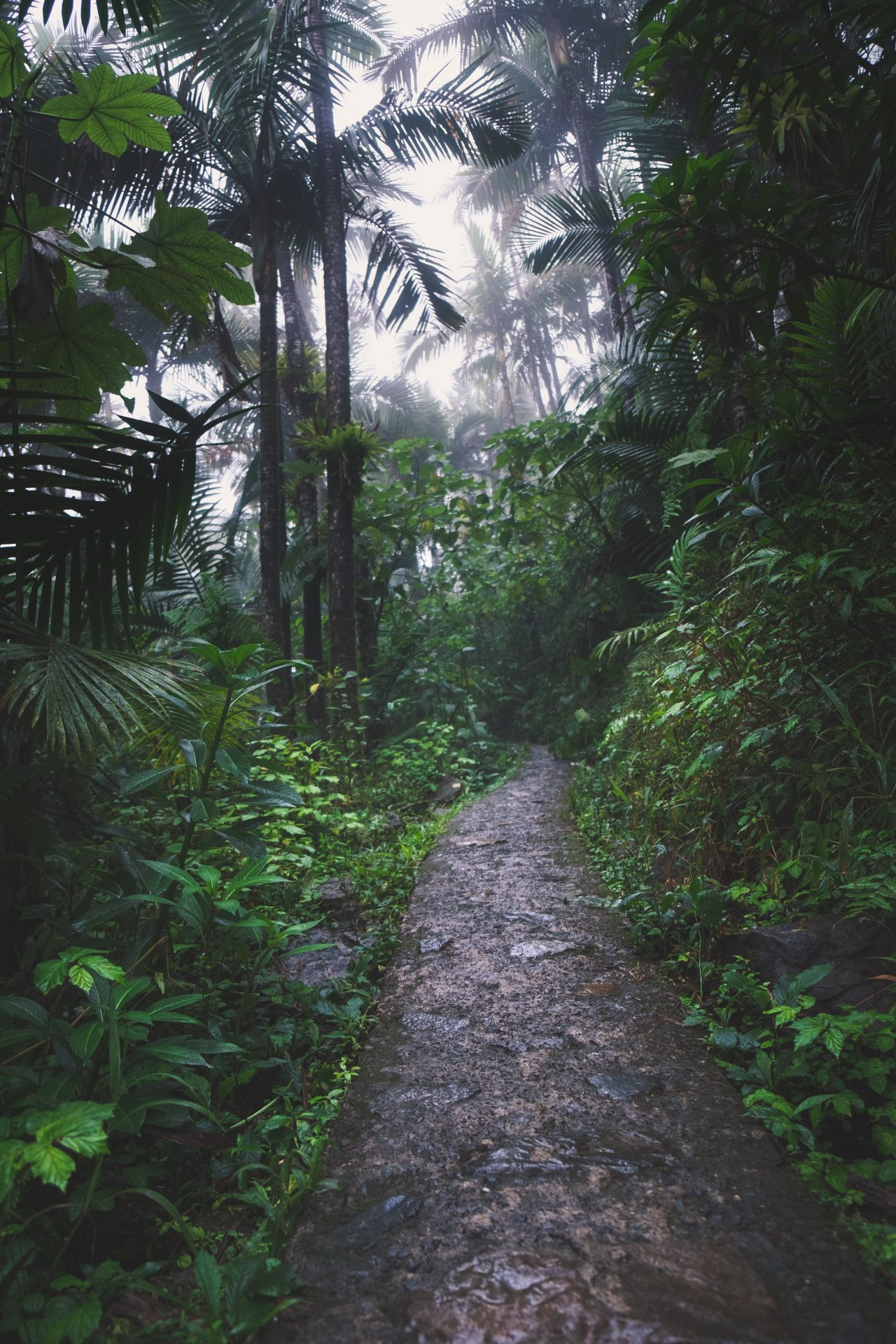 El yunque tropical forest in Puerto Rico Photo by Jo Kassis